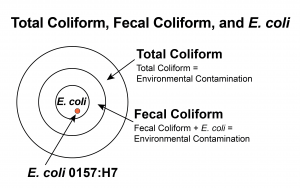 Total Coliform Circle Graphic: outer circle is total coliform, second layer is fecal coliform, and the core it E. coli